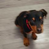 Sonny dog